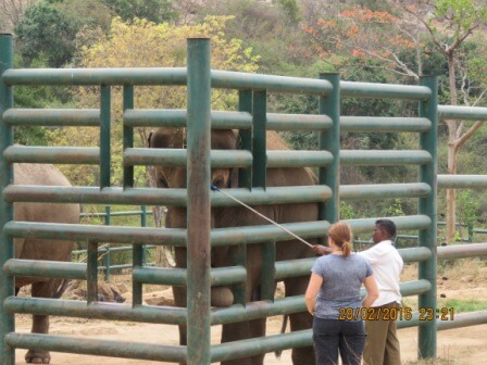4 Kumar-Sunder's care taker is doing practice and Margaret is observing training-29.02.2016