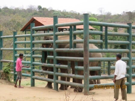 5 Laxman-Sunder's care taker is doing practice and Margaret is observing training-29.02.2016