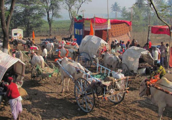 Chinchali Fair: Sponsor a Bus, Spare a Bull