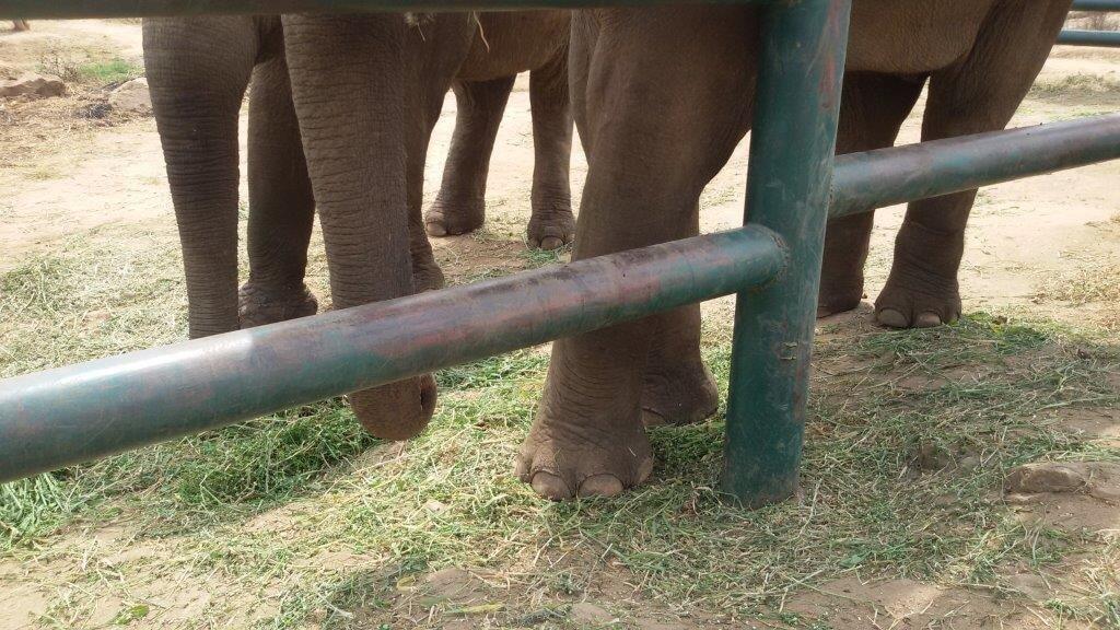 Sunder and Maneka chain free legs