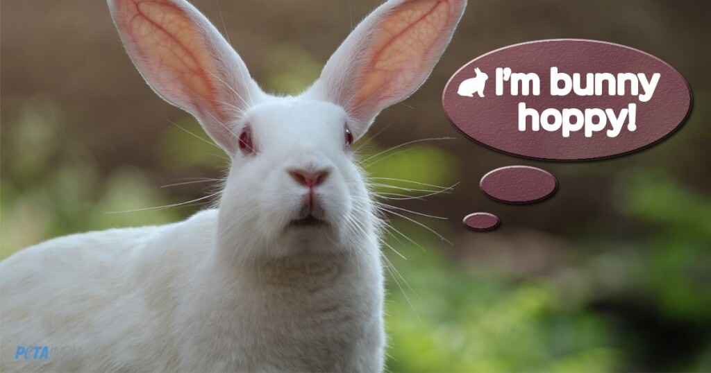 bunny images for repeat animal tests ban image