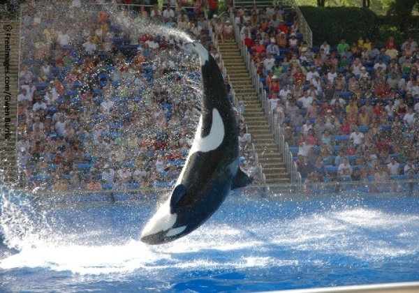 Urge the Dubai Government to Keep SeaWorld Out!