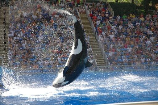 Urge the Dubai Government to Keep SeaWorld Out!