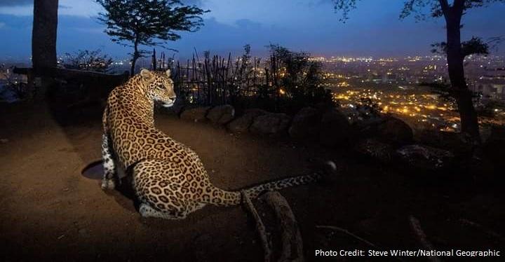 Delhi-Mumbai Industrial Corridor to Disrupt Wildlife: Help Prevent This