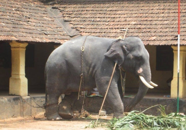 Legal Notice Sent to Kerala Government Over Elephant Ownership