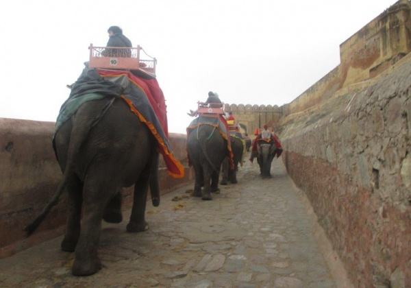 Exhausted Elephant Dies After Giving Joyrides