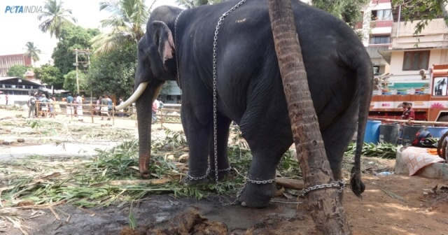 Urge Kerala's Government to Protect Elephants