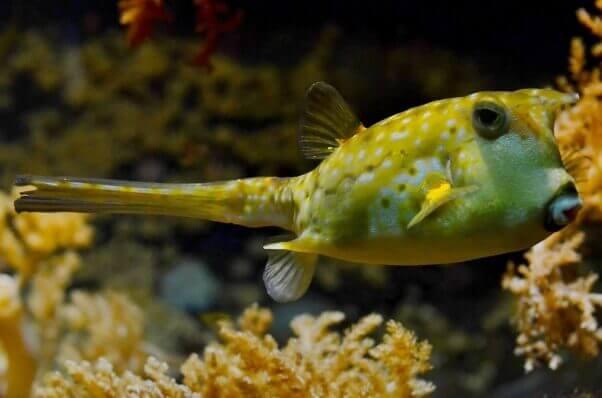 loyal-blowfish-602x398-1459374173