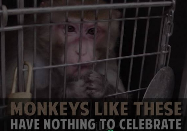Help Monkeys in the Year of the Monkey