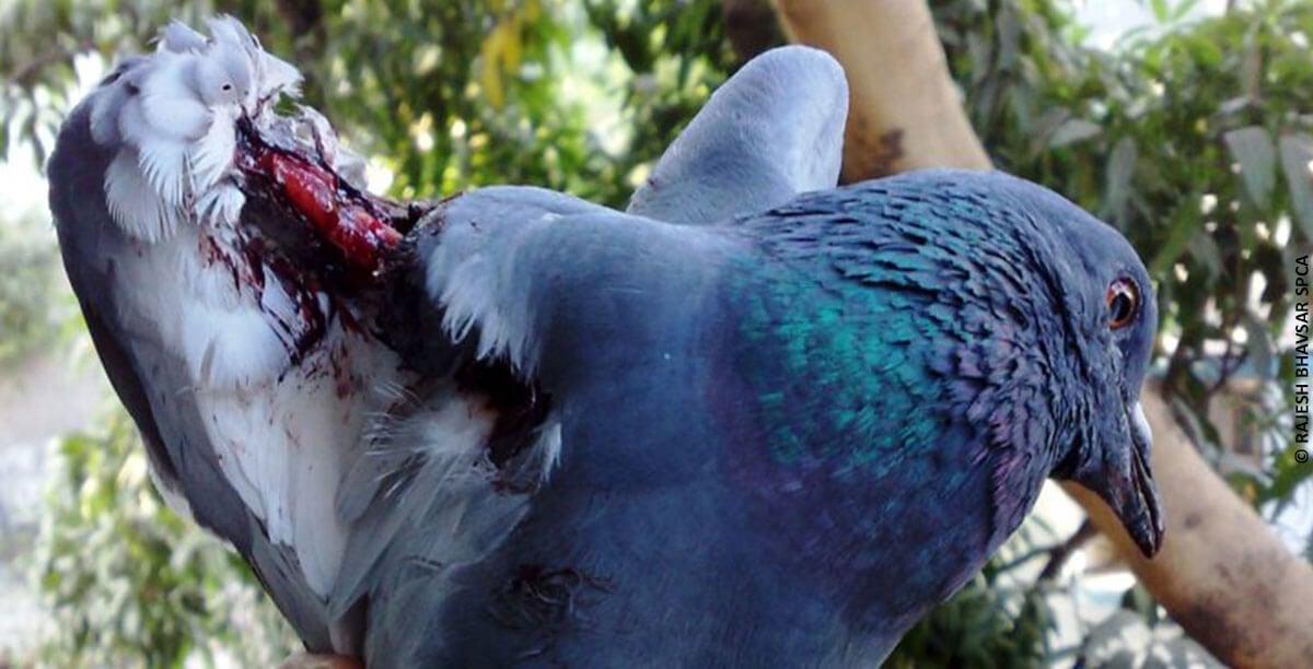 Pigeon-blog-image-1200x612
