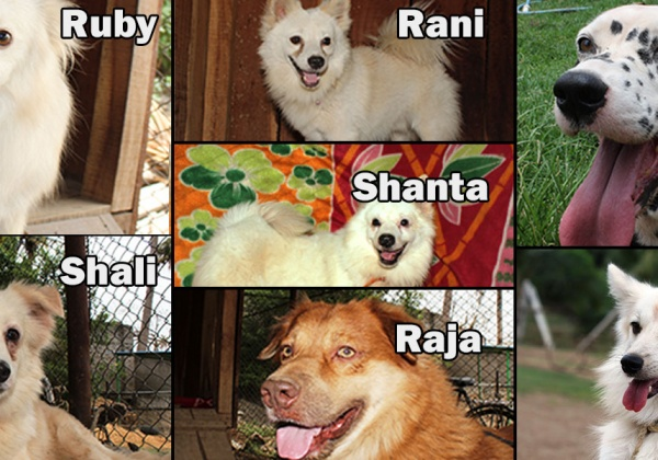 Dogs Rescued From Circuses in Need of Loving Homes