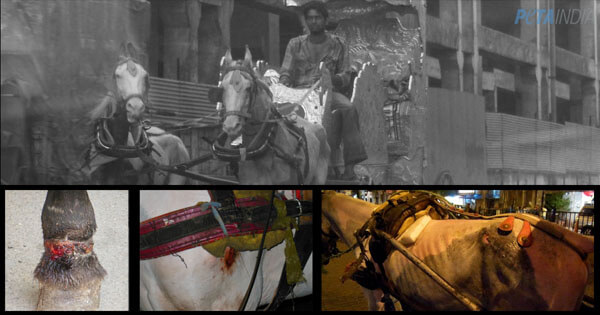 Help Get Harmful Horse Carriages off Mumbai Roads