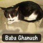Abhishek Prusty rescued Baba Ghanush when a dog bit him. He is healthy now and loves to play and cuddle.