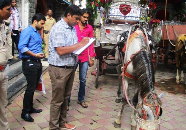 Three Injured Horses Seized by Mumbai Police
