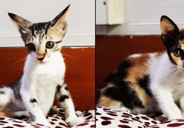 These Two Kittens Up for Adoption Will Make Your Day With Their Cuteness