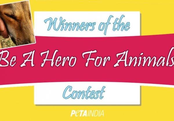 Winners of the 'Be a Hero to Animals' Contest