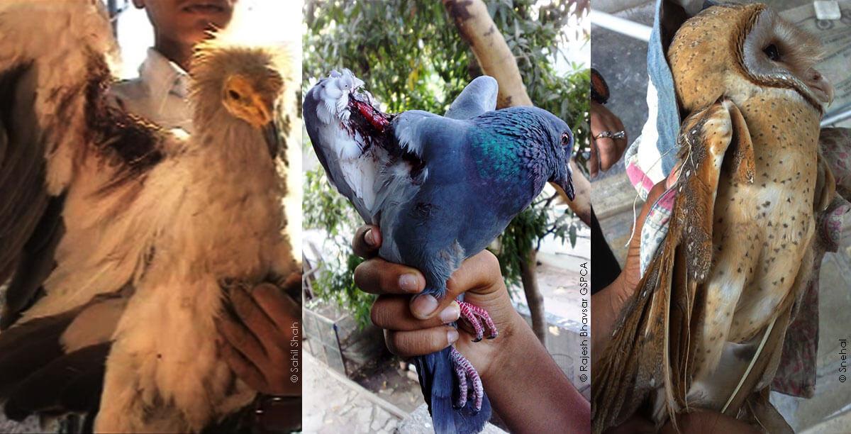 Manja_Collage_Injured_Birds_PETA-India