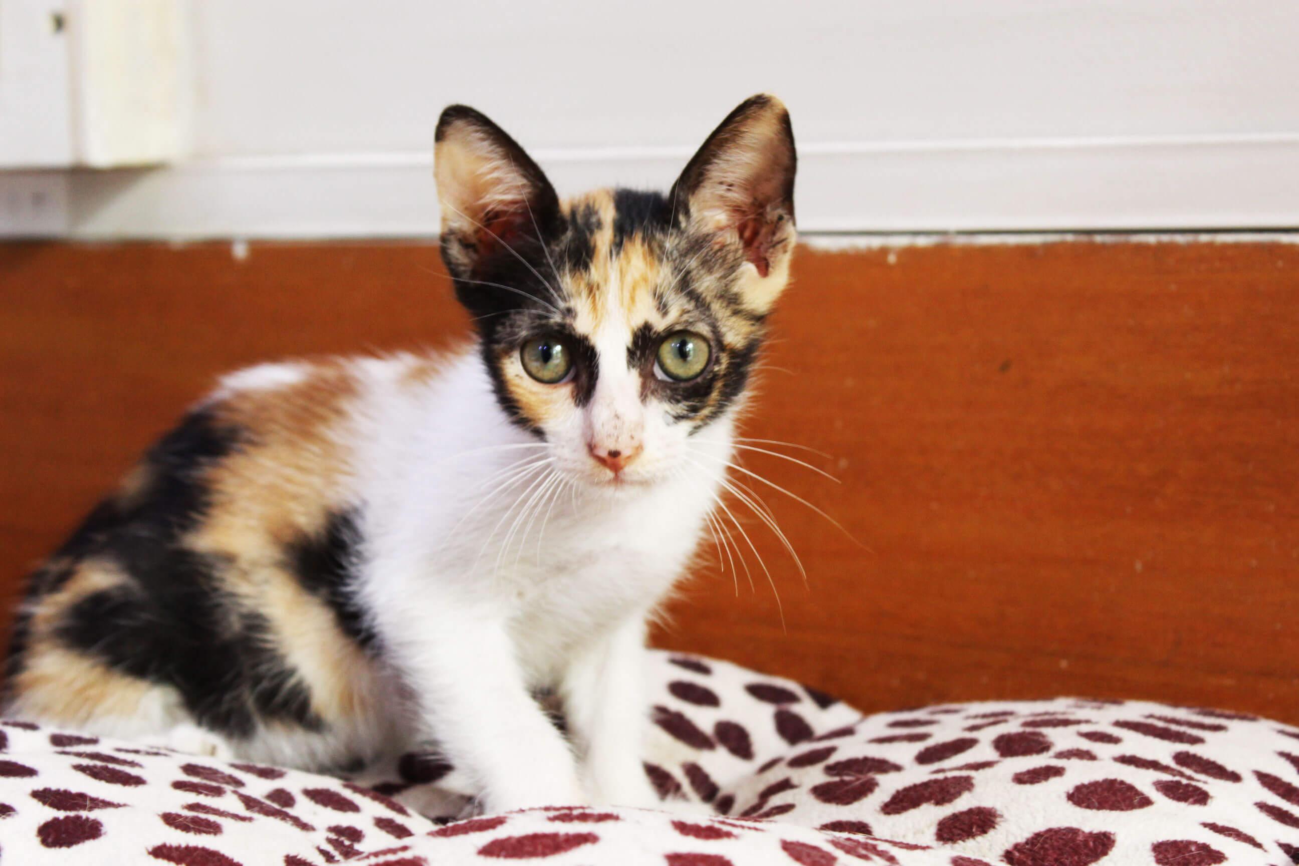 Orange Kitty 3