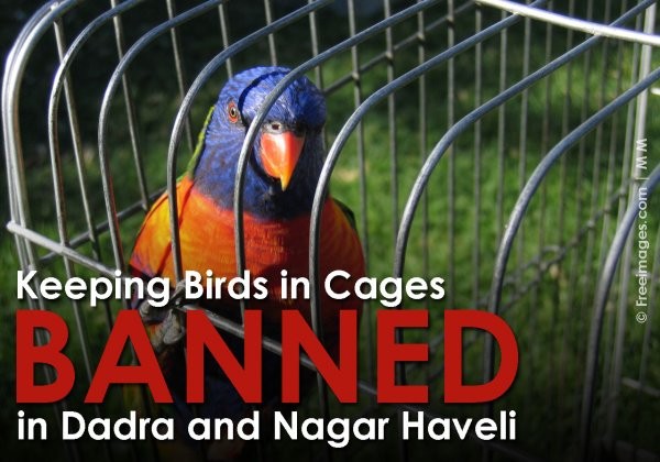 Dadra and Nagar Haveli Bans Caging of Birds