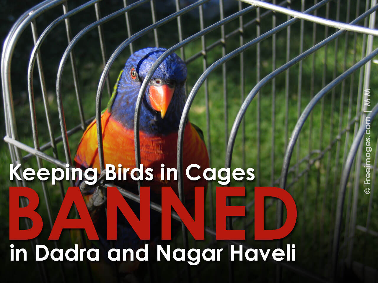 a-caged-life-1487636-1280x960Website_thumbnail