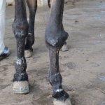 Equine testing blog