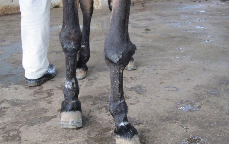 Blog zum Testen von Pferden