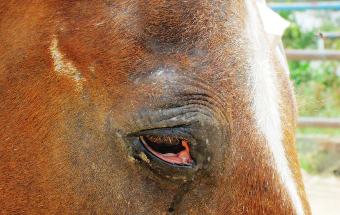 PETA International Science Consortium Funds Research to End Indian Horse Experiments
