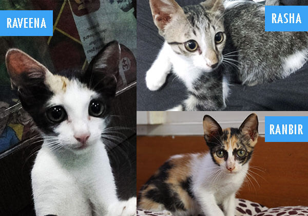 Cats Up for Adoption Named After Raveena Tandon & Her Kids