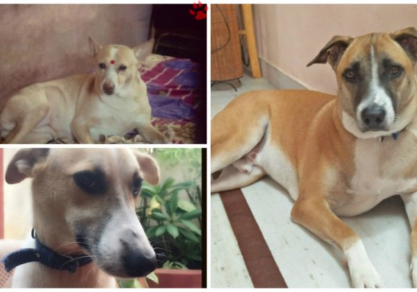 Meet PETA's 2016 'Cutest Indian Dog Alive' Winners