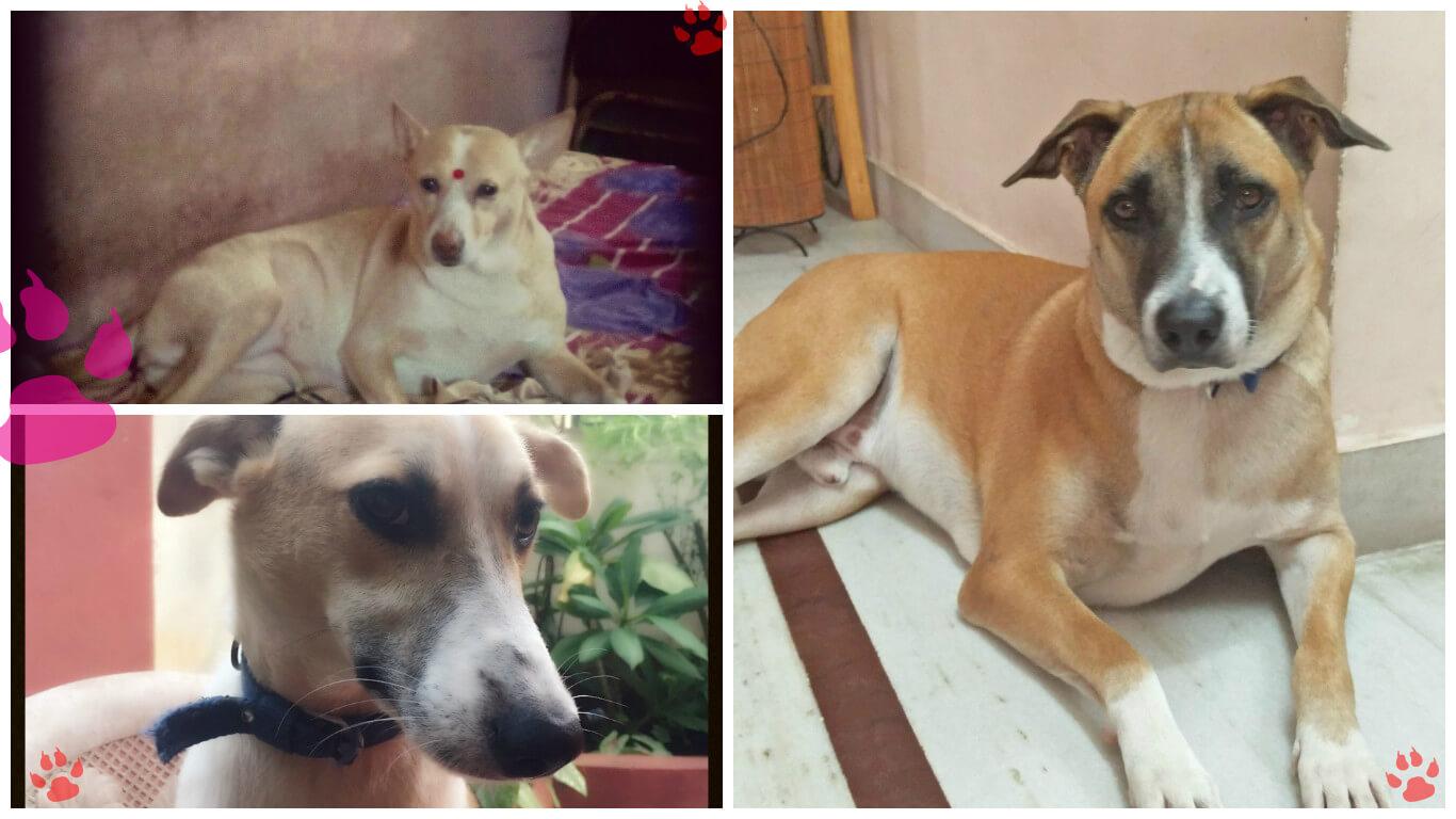 Meet PETA's 2016 'Cutest Indian Dog Alive' Winners