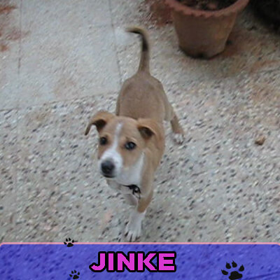 Jinke had been abused and was covered with wounds when Surya rescued him. Jinke is now a permanent member of his family.