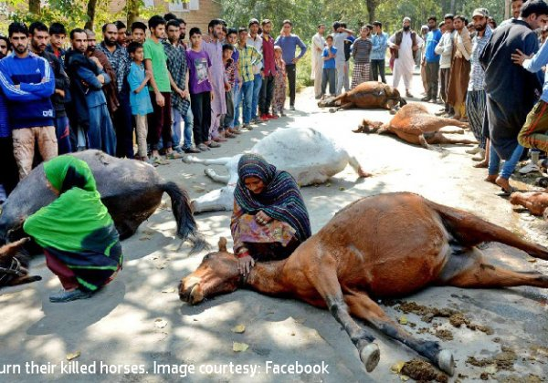 PETA Urges Defence Minister to Investigate Horse Deaths