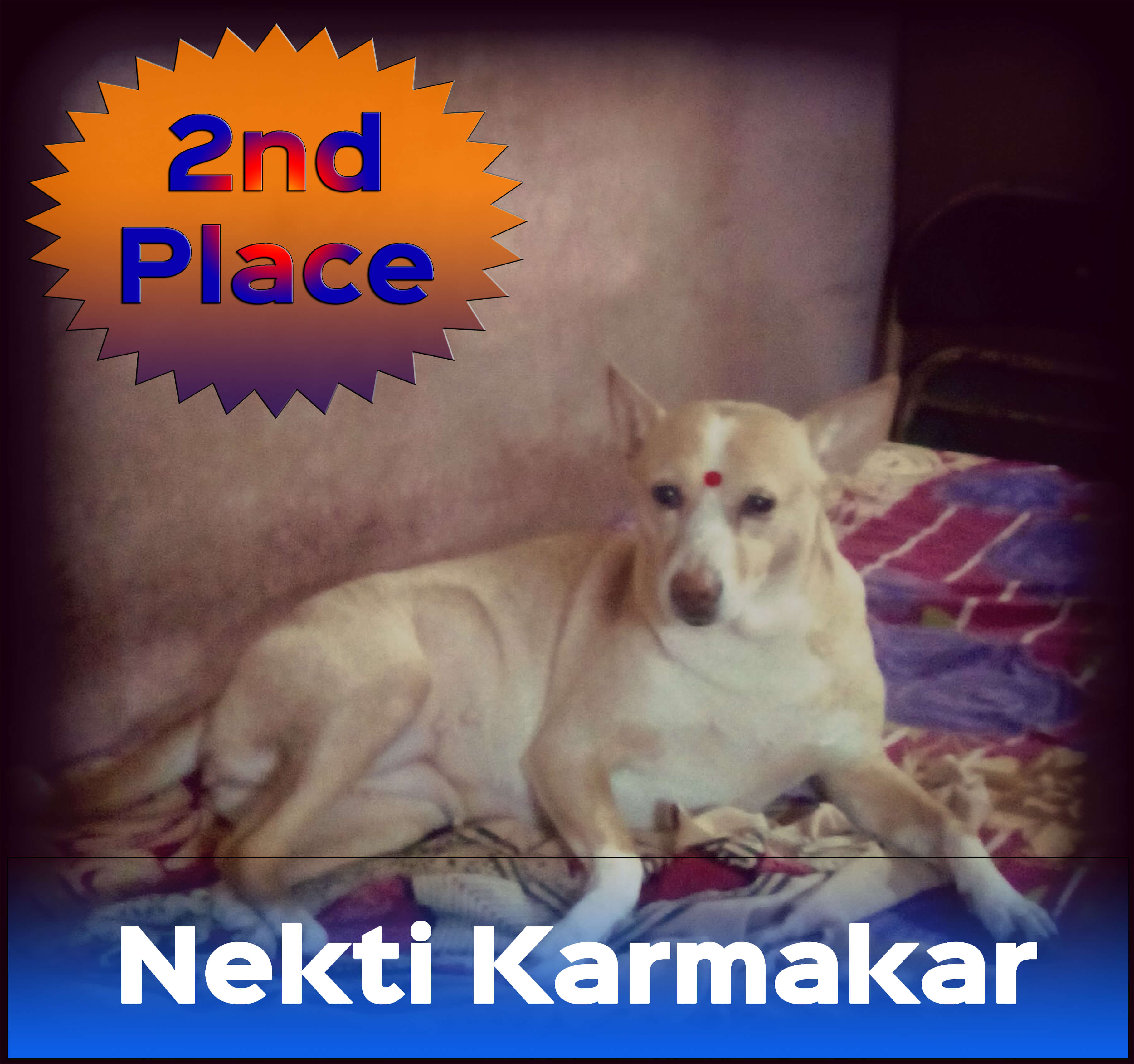 Voters helped Nekti Karmakar be named the first runner-up in PETA's 2016 Cutest Indian Dog Alive contest.