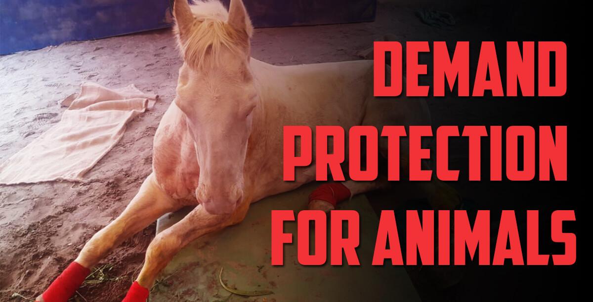 shaktiman_animal_protection_law1200x612
