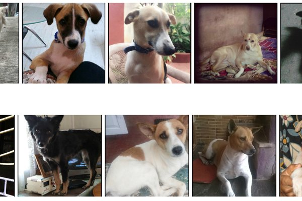 Help Decide Who Will Win PETA's 2016 Cutest Indian Dog Alive!
