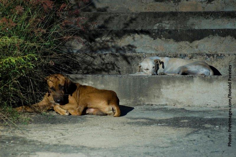 PETA Calls for Psychiatric Help for Kerala Dog Killers