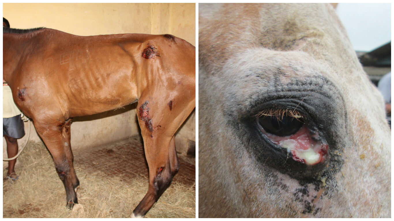 horses used for anti-toxins diptheria blog