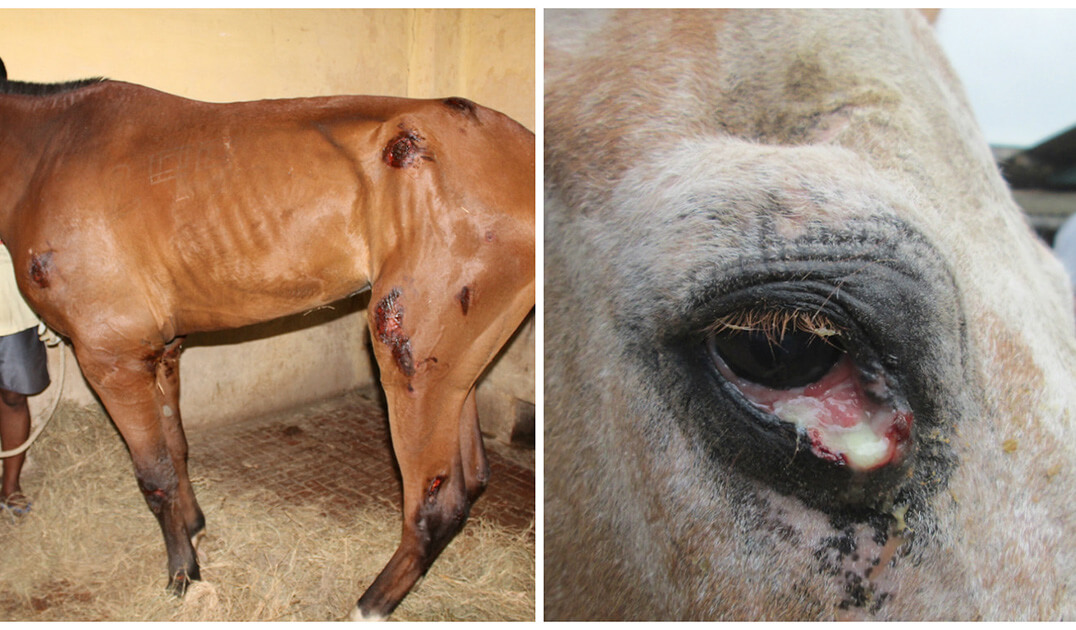 Urge the Government to Close Abusive Horse and Donkey Facilities