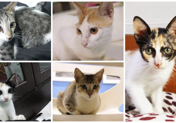Five adorable kittens are STILL looking for loving homes!