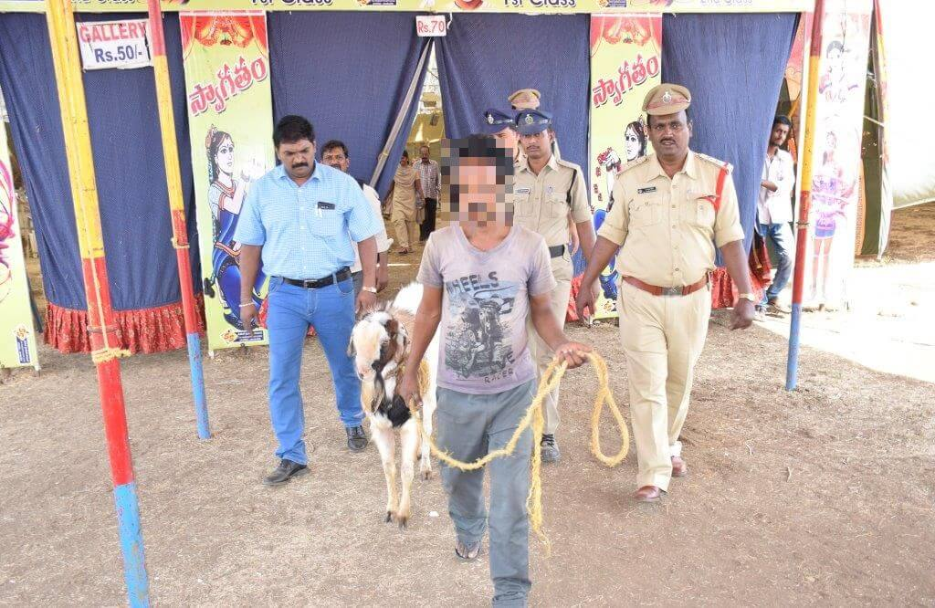 Goat being removed from circus.