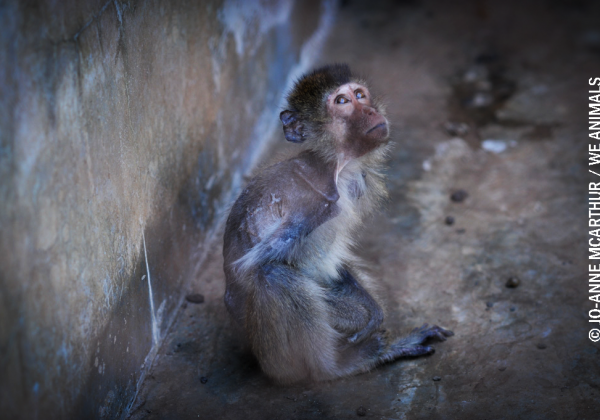 PETA Calls For Permanent Expulsion Of Vellore Medical Students Who Allegedly Tortured, Raped, And Killed A Monkey