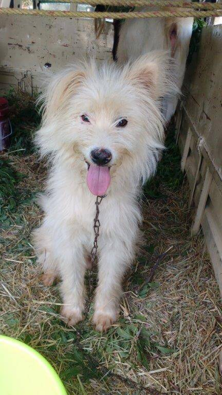 one-of-the-dogs-rescued-from-new-sam-circus