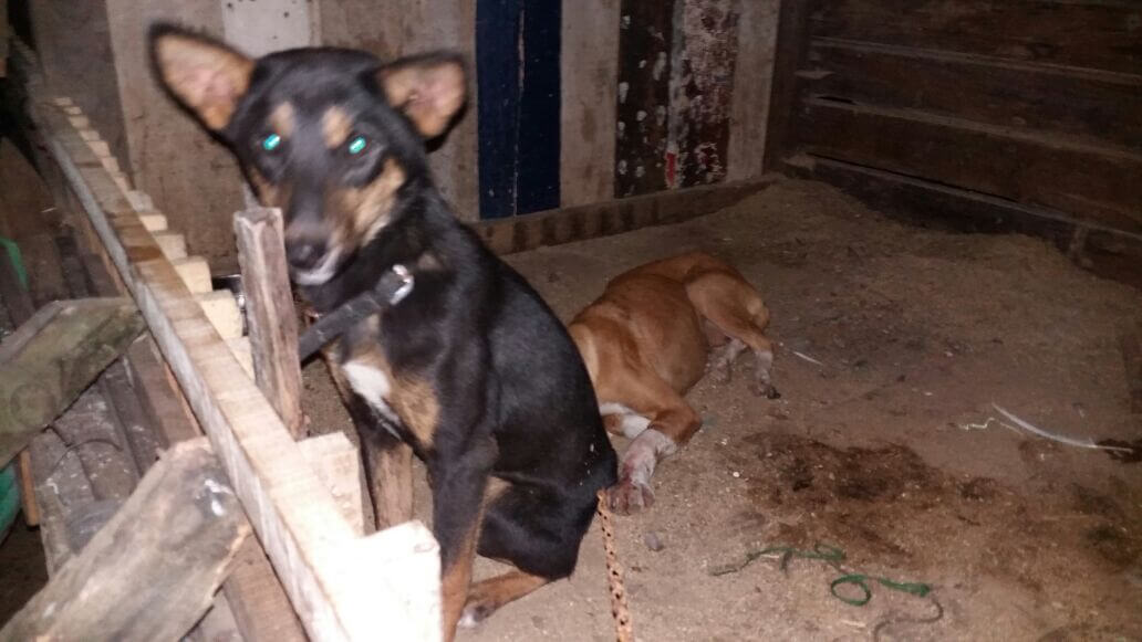 PETA, Shillong Locals & Police Rescue Dogs From Slaughter