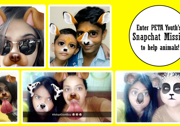 Use Snapchat to Help Animals? Yes, Please!