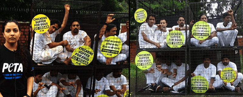veg-demo-bhopal
