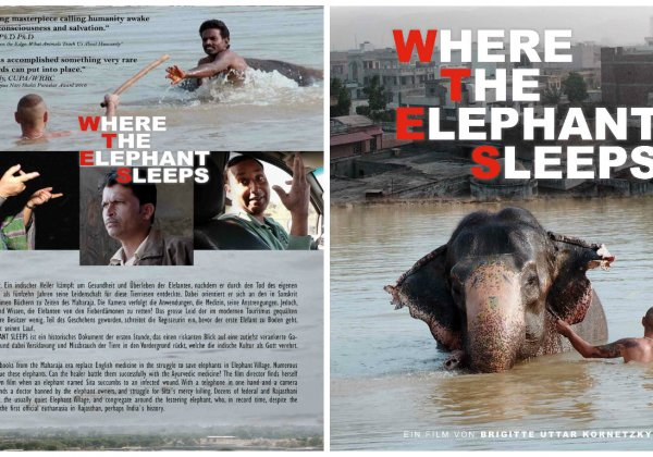 Watch 'Where the Elephant Sleeps' for Free