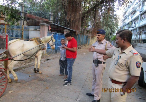Mumbai Police Seize Three Suffering Horses From Unlicenced Victoria Carriage Drivers