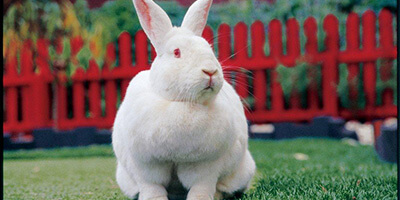 bunny image used in peta india's 20 anniversary victory web feature