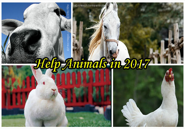 5 Easy New Year's Resolutions for Animals