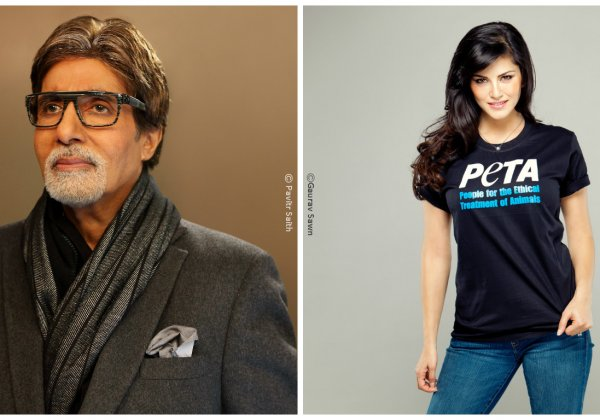 Amitabh Bachchan and Sunny Leone Take the Lead in PETA's 'Hottest Vegetarian Celebrity' Contest